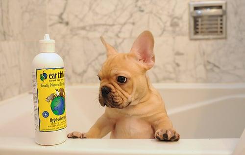 perrito francés en el baño