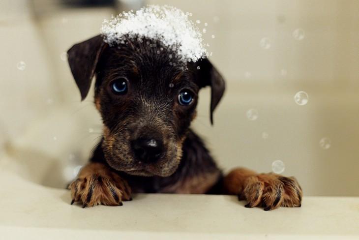 perrito bañandose por sucio