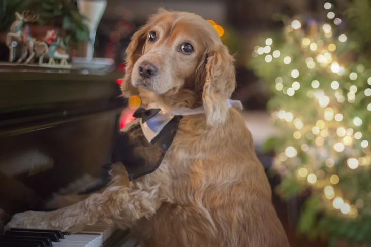 perrito tocando el piano