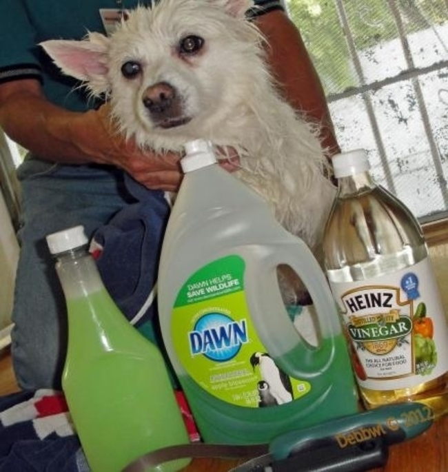 como hacer un shampoo antipulgas