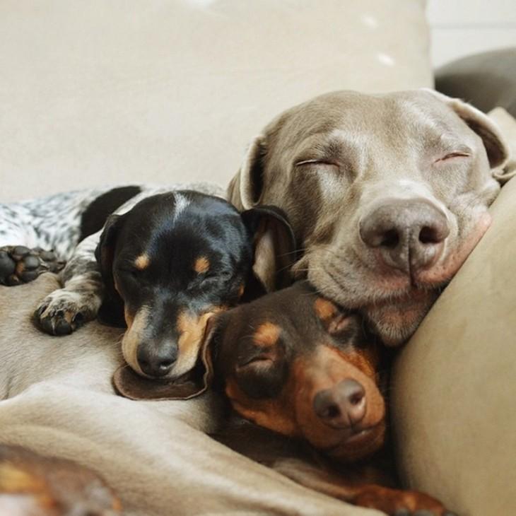 tres perros durmiendo una siesta en un sofa