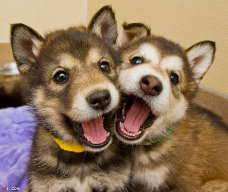 Cachorros posando para la foto