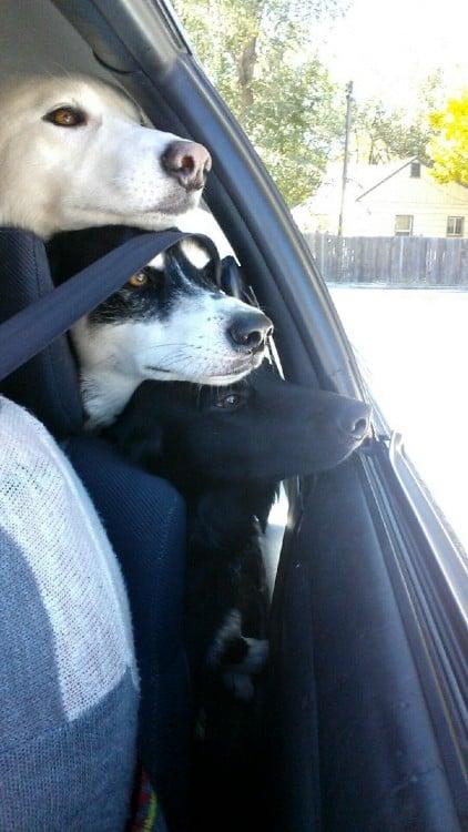 totem de perros, tres perros apilados unos encima del otro