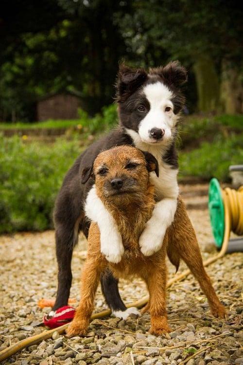perritos en caballito