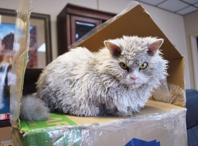 Alberto el gato sentado sobre una caja de cartón