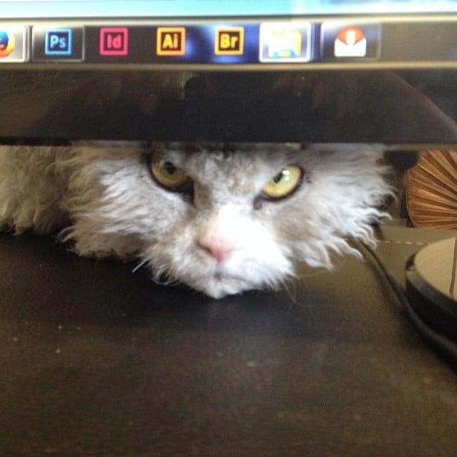 Alberto el gato debajo del monitor de una computadora