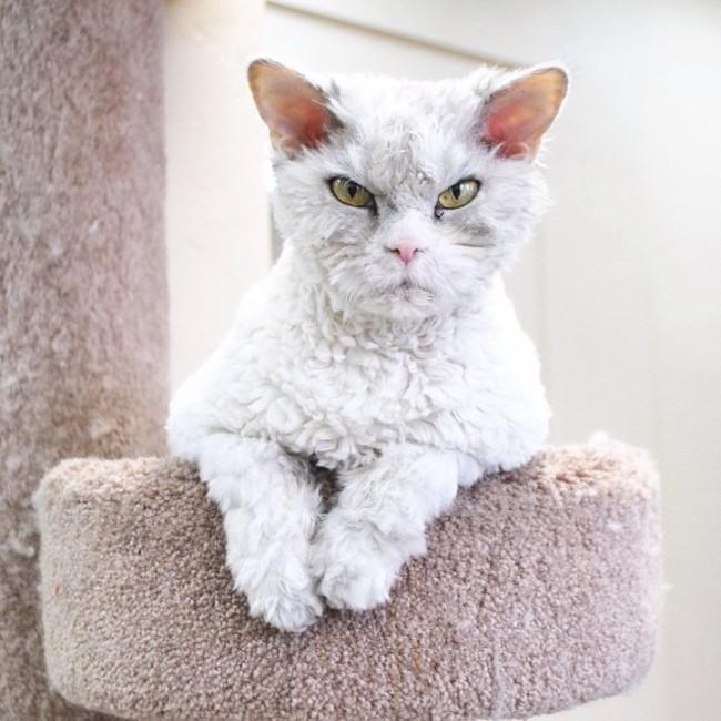 Alberto el gato recargado sobre una silla