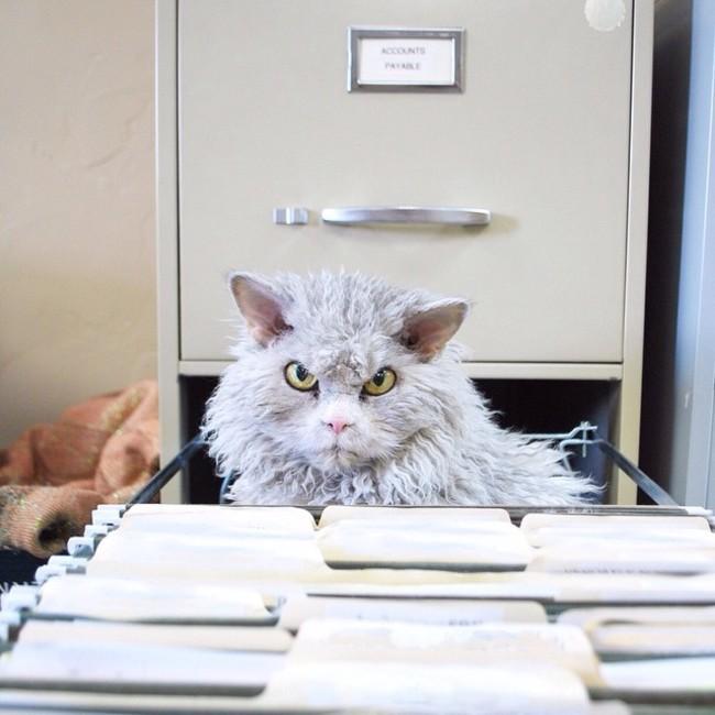 Alberto el gato dentro de un archivero