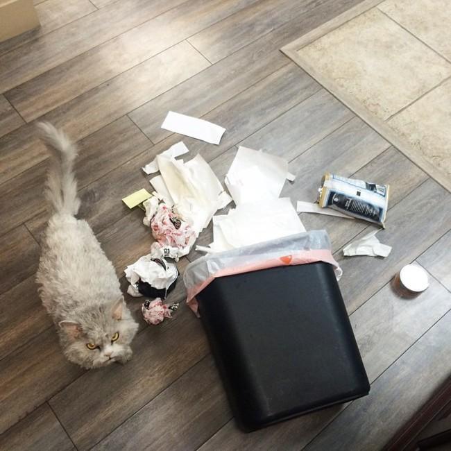 Alberto el gato a un costado de un bote con basura tirada en el suelo