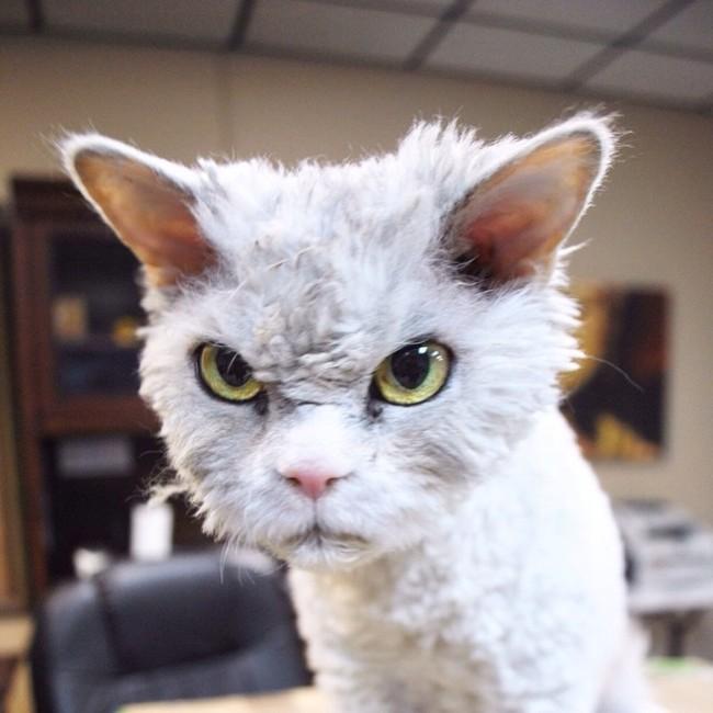 Alberto el gato mirando fijamente hacia enfrente