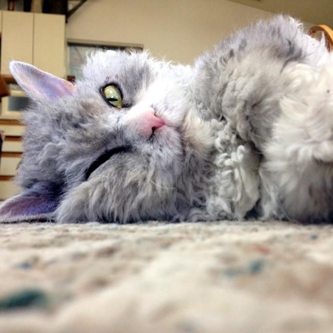 Alberto el gato tirado en el suelo con un ojo cerrado