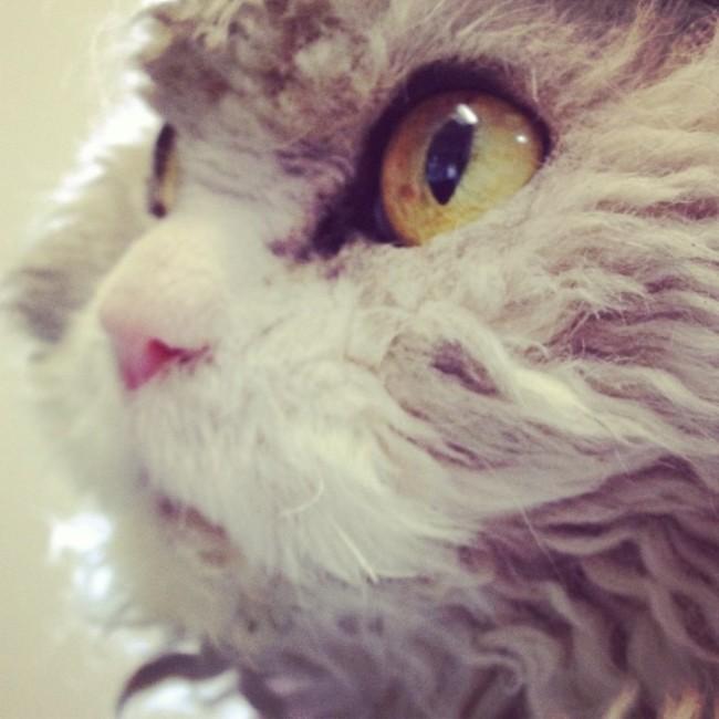 Cara de Alberto el gato