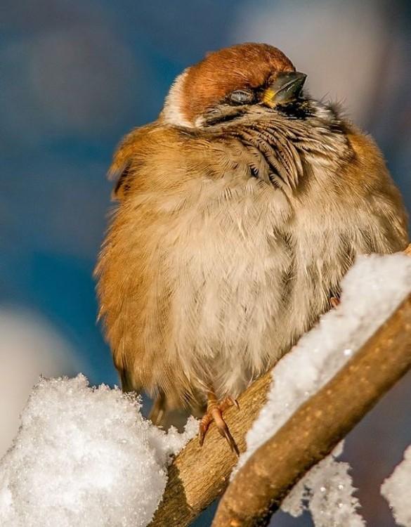 Pájaro sobre la rama de un árbol tomando un poco la luz del sol