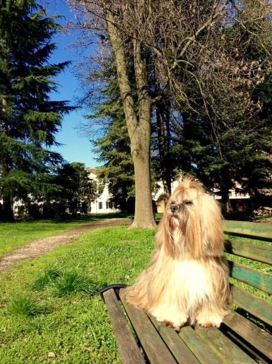 Un perro sobre una banca tomando el sol