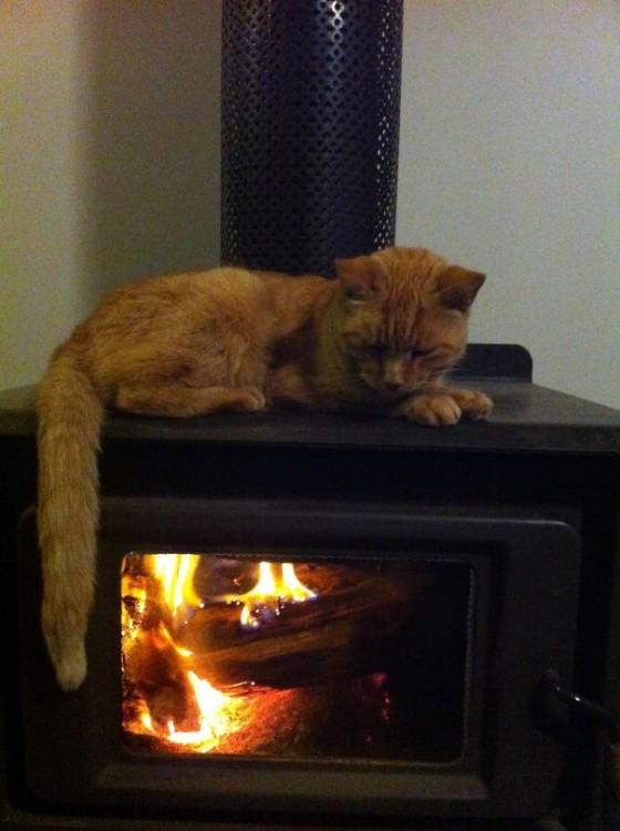 Gato acostado sobre un calentador de leña