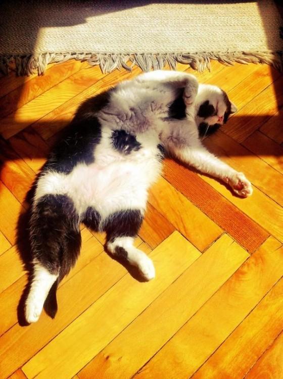 Gato acostado sobre el suelo en la luz del sol
