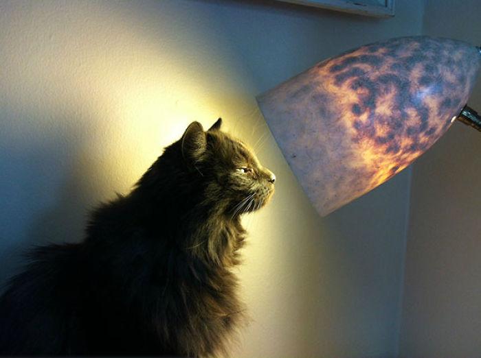 Gato viendo directamente a la luz de una lámpara
