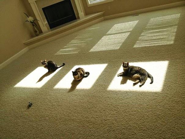 3 gatos acostados en una parte con sol