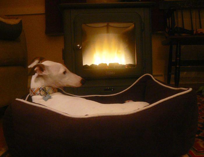 Perro acostado en su cama frente a una chimenea
