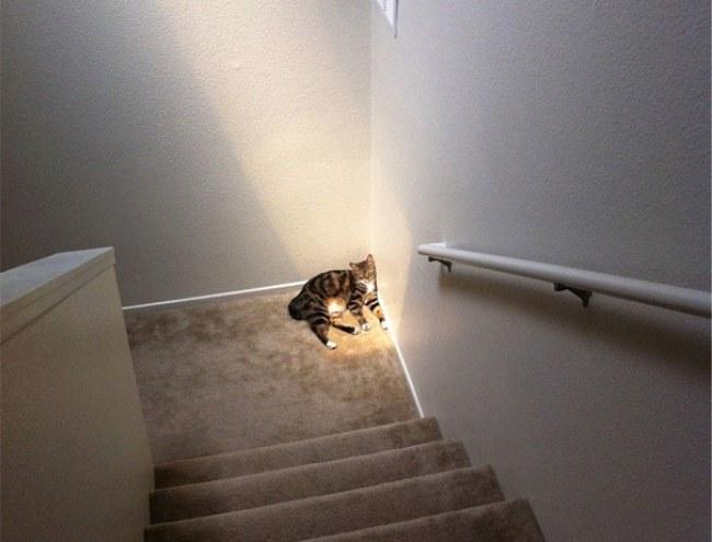 gato en la esquina de un escalón sobre un rayo de sol