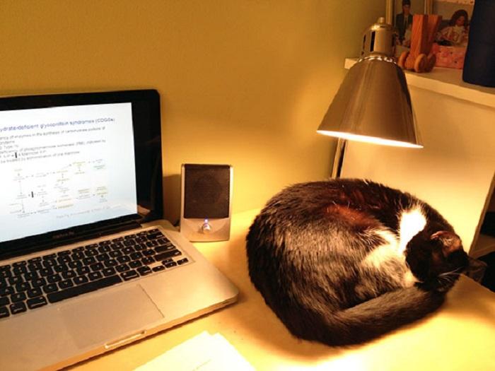 Gato acostado sobre un escritorio bajo la luz de una lámpara