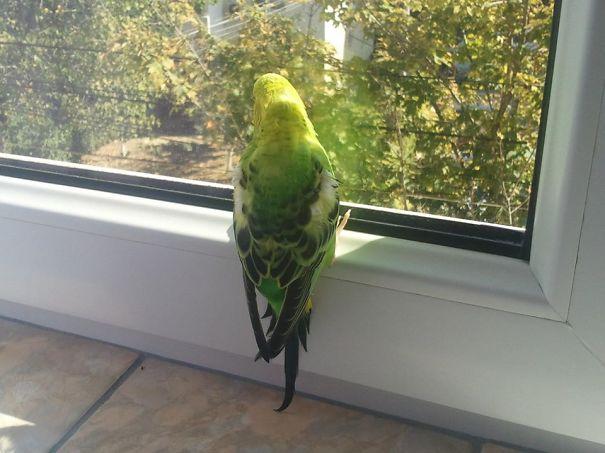 Pájaro frente al sol que da una ventana