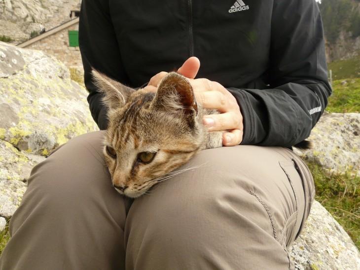 Gato recostado sobre las piernas de su amo