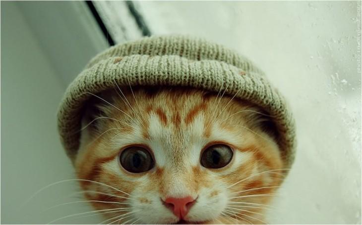 Cara de un gato con los ojos mirando fijamente hacia enfrente