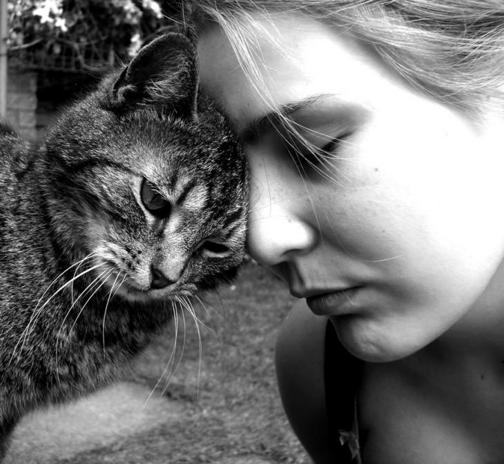 Gato frente a la cabeza de su ama