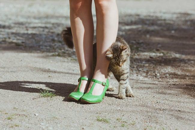 Gato detrás de las piernas de su dueña, rodeándola