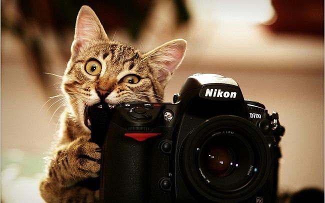 Gato mordiendo una cámara fotográfica