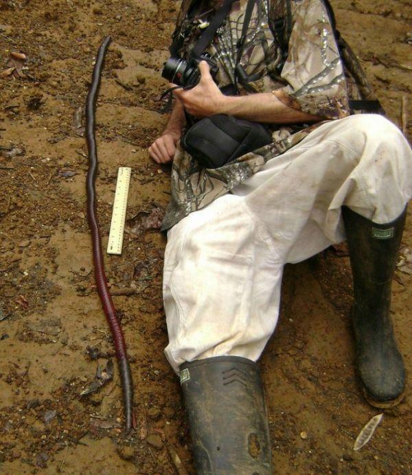 Fotógrafo acostado en el suelo a un costado de una lombriz de Gippsland