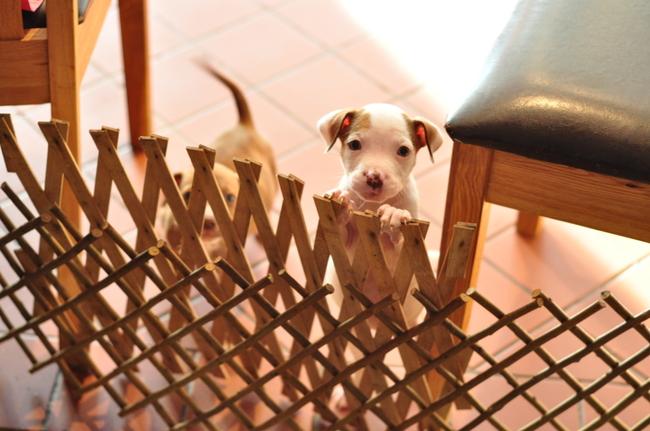 Cachorro detrás de una reja