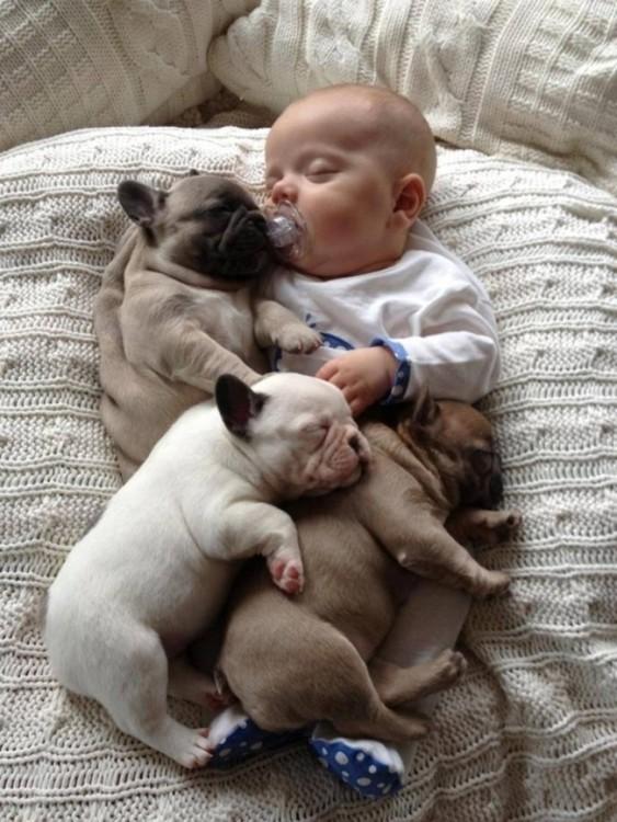 Un bebé dormido alrededor de 3 cachorros