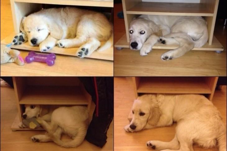 Imagen con fotografías del crecimiento de un cachorro