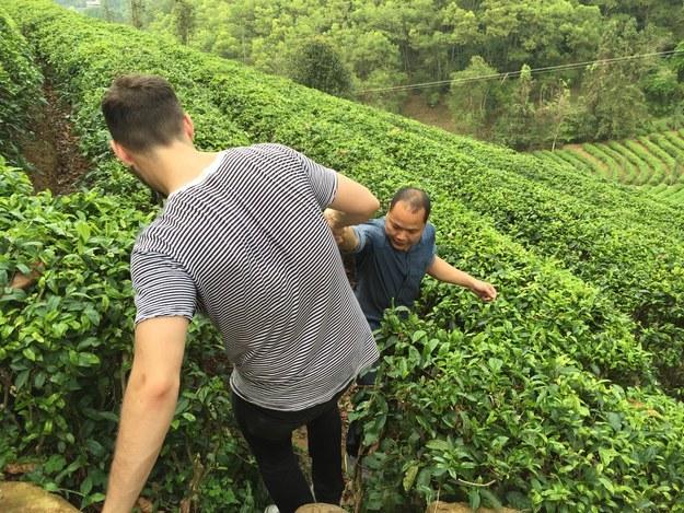 Matt Stopera ayudando al hermano naranja a subir por la granja de té