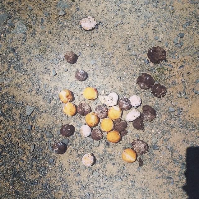 Panquecitos tirados en el suelo