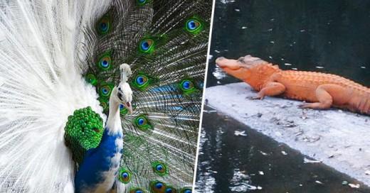 Cover-20-impresionantes-animales-con-alteraciones-geneticas-3