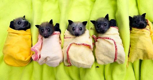 Los murciélagos son adorables
