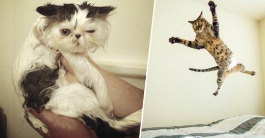 Gatos gatos