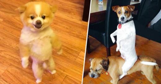 momentos divertidos de estos perros