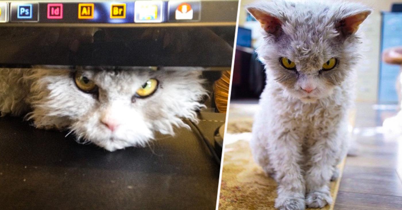 """Alberto """"El pomposo"""" el gato con cara de mal humor"""