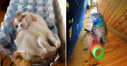 Graciosos gatos que se han metido en serios problemas