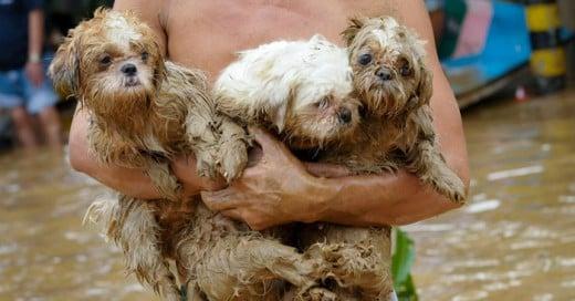 rescatando animales es una gran labor de pocos humanos