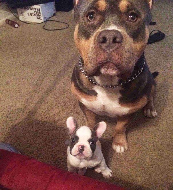 perros mirando a la camara
