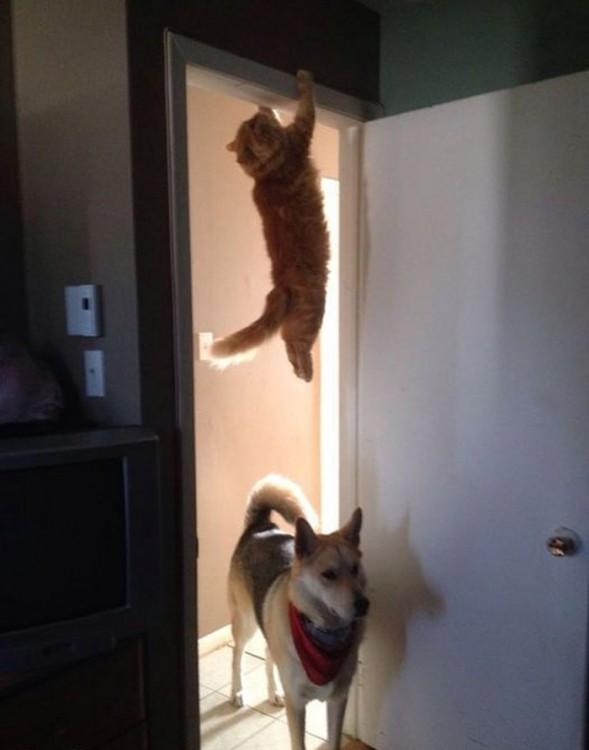 Gato colgado de una puerta y un perro en el suelo bajo el gato