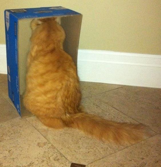 Gato dentro de una caja de zapatos vertical