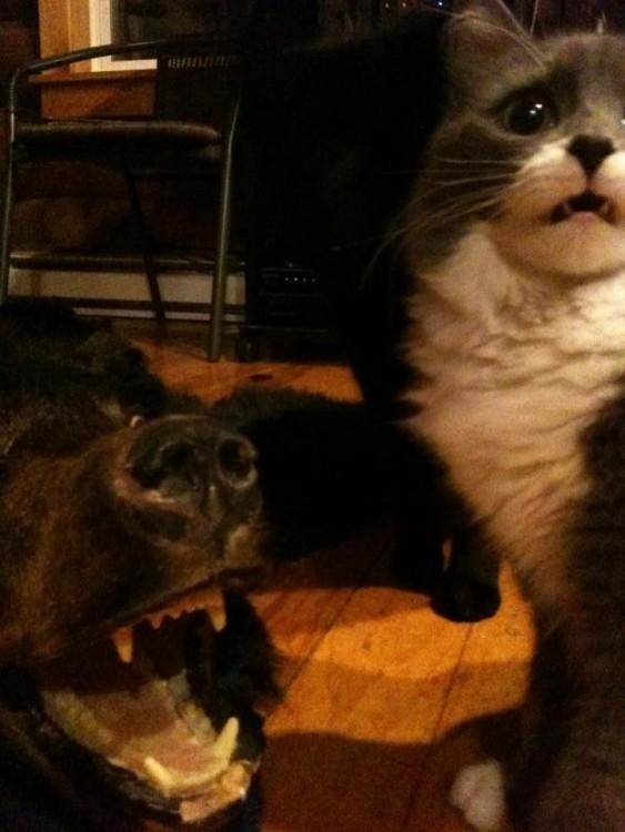 Perro enojado ladrando a un gato con cara de susto