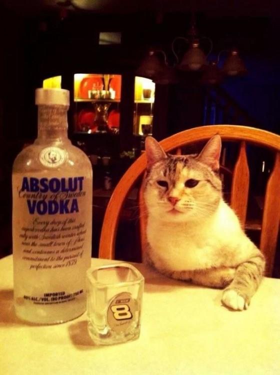 Gato sentado en una silla frente a una botella de vodka