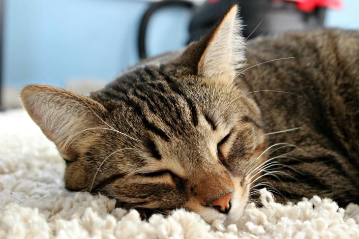 Gato dormido en una alfombra
